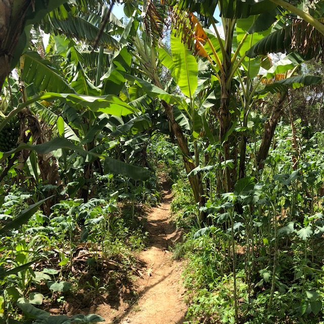 The Food forest at Laikipia Permaculture Centre