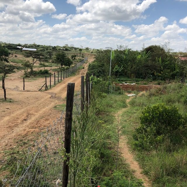 The difference between traditional and agroforestry