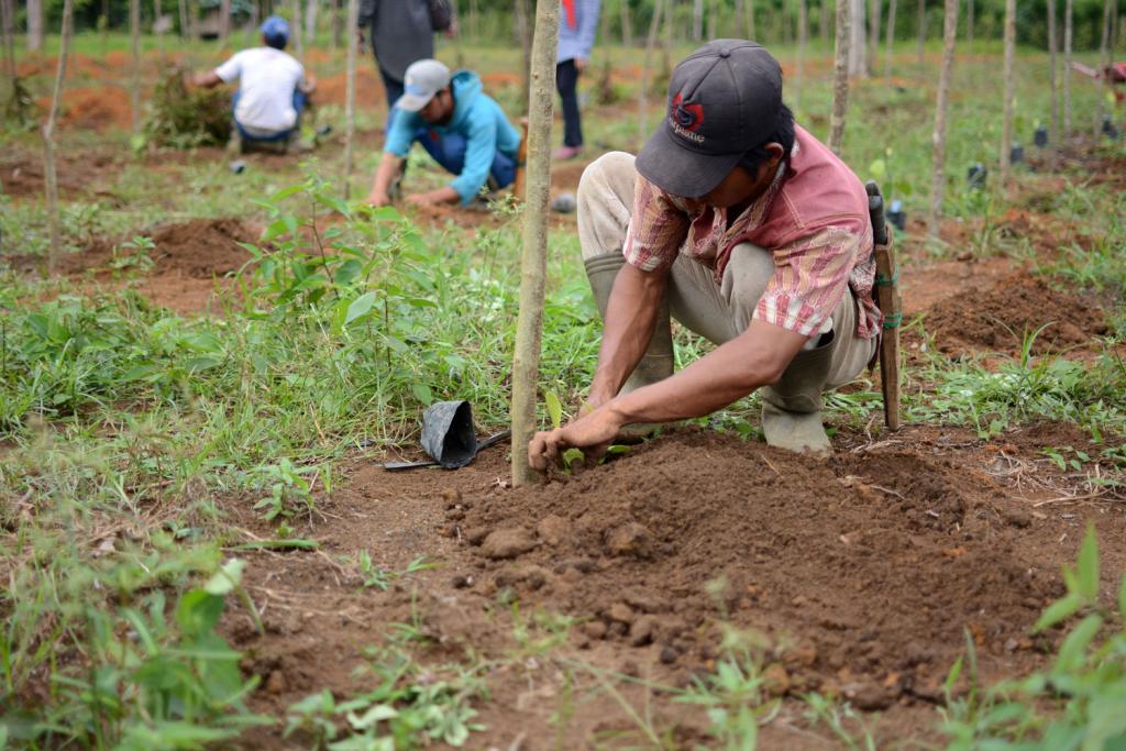 Planting the biomass
