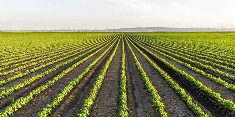 A monoculture farm (© Greentumble)
