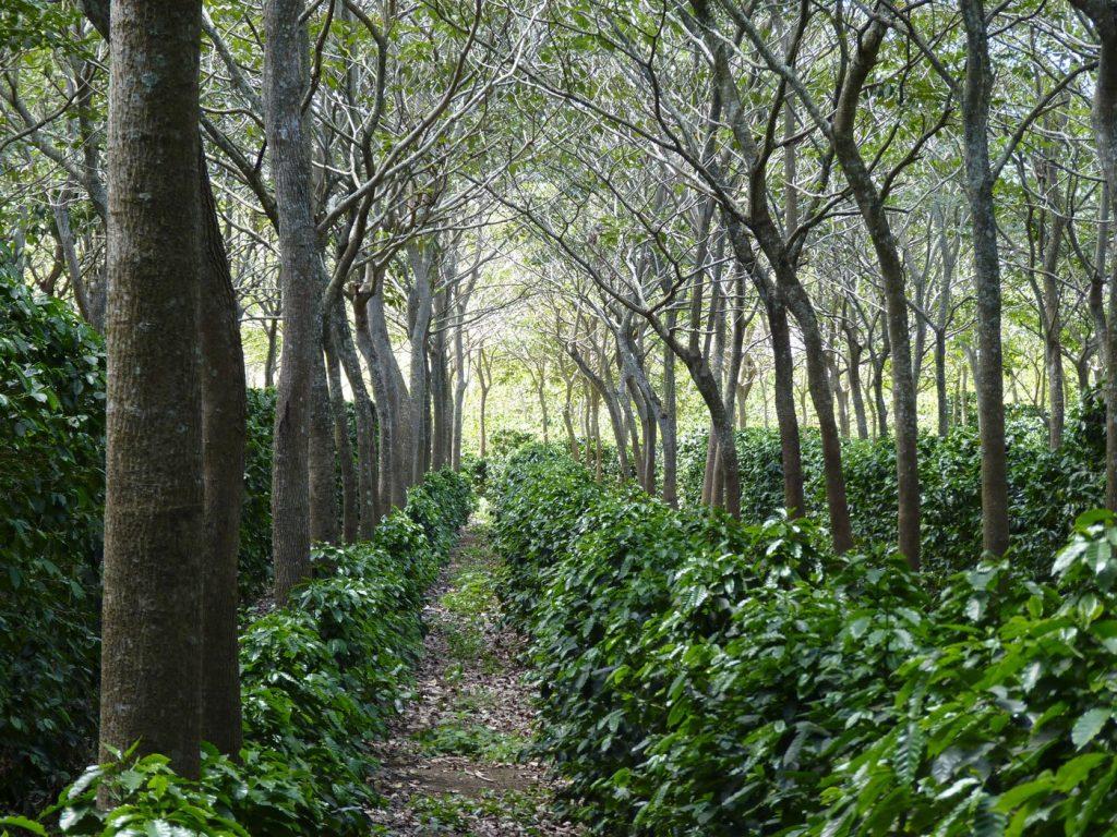What is Regenerative Agriculture   reNature