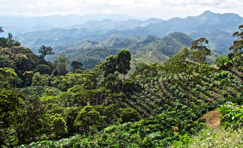 Figure 10 - An agroforestry system in a hilly landscape. Source: the Moringa Fund.