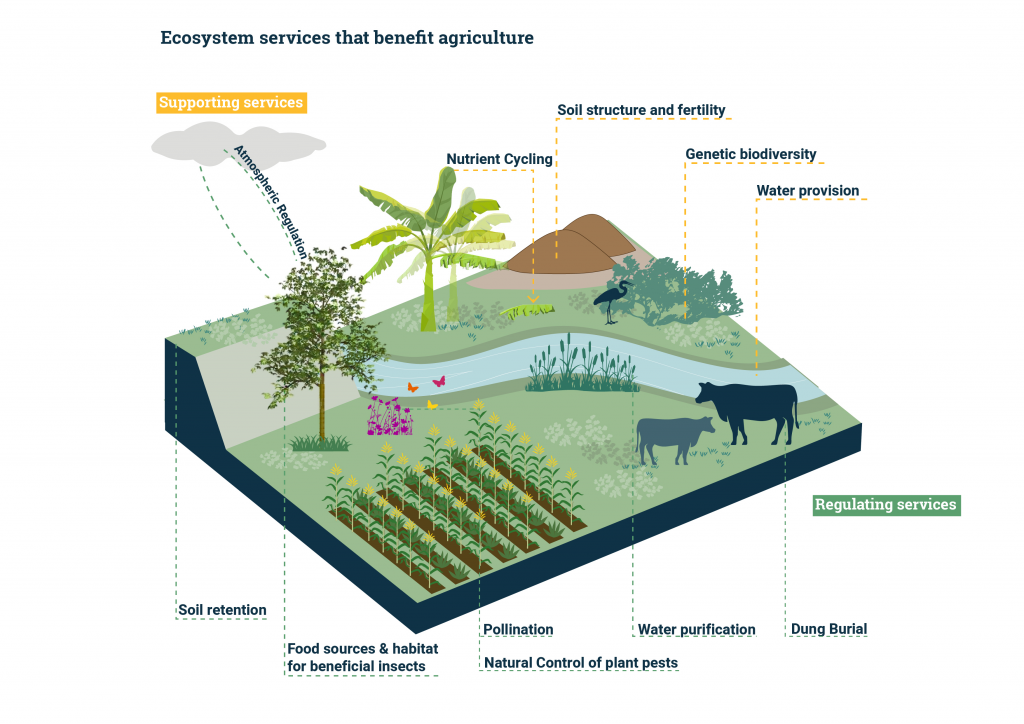 ecosystem-services-agriculture