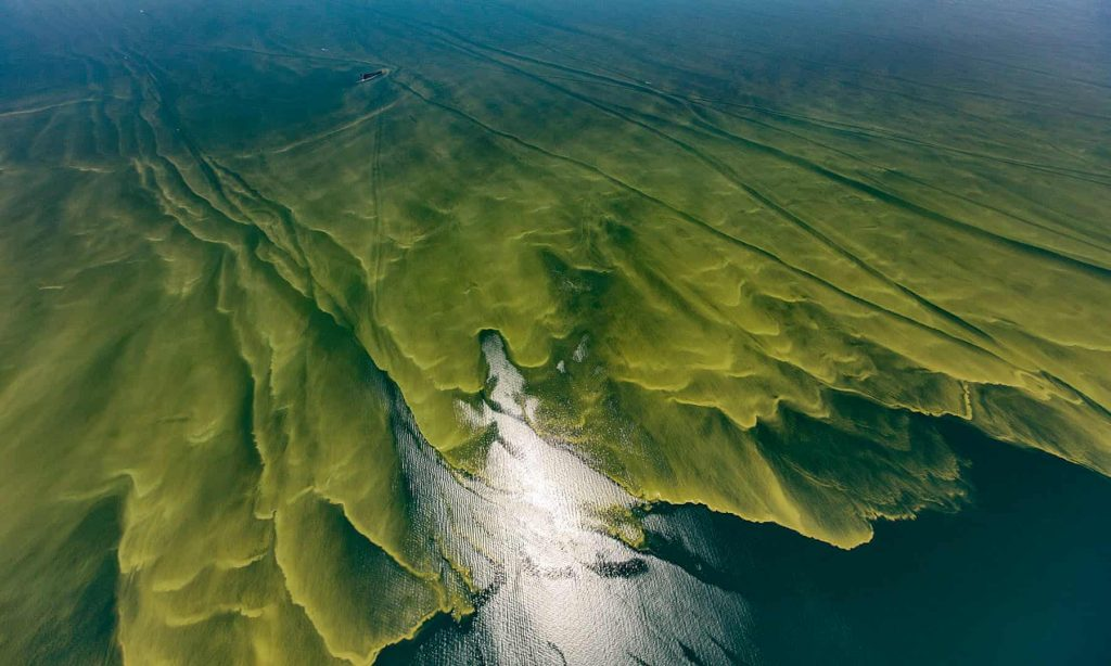 algae-bloom-lake-erie