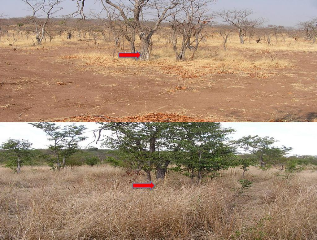 regenerated-land-comparison-after-livestock-impact