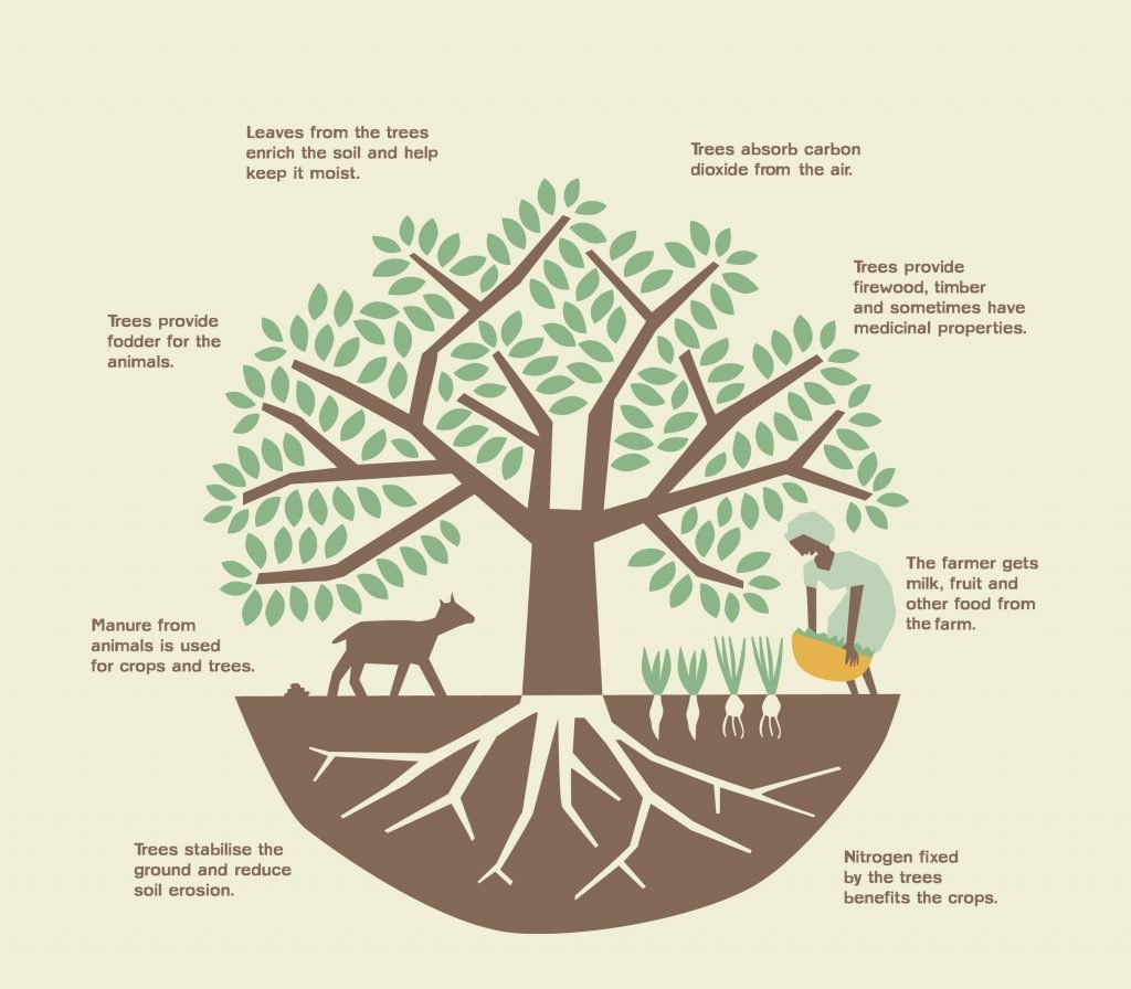 A definition of Regenerative Agroforestry   reNature
