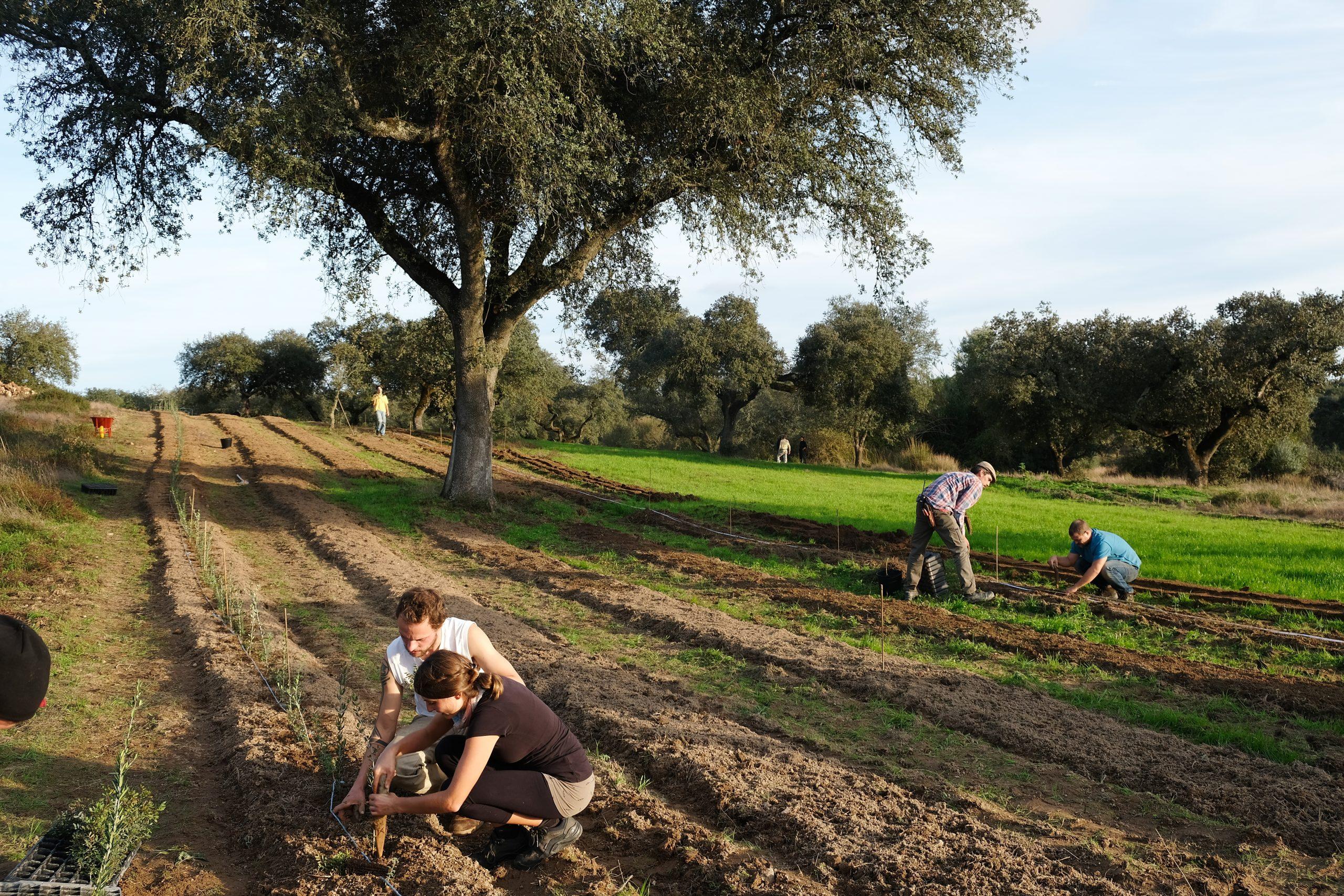 quinta-das-abelhas-portugal-planting-rows