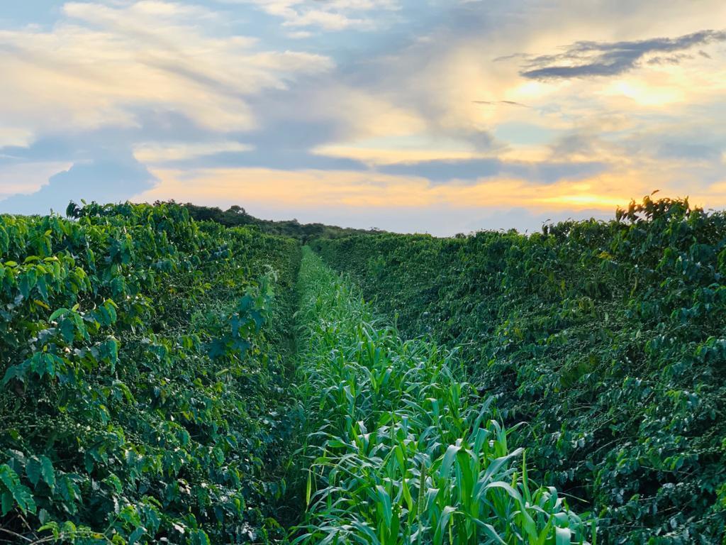 Agroforestry Landscape in Brazil
