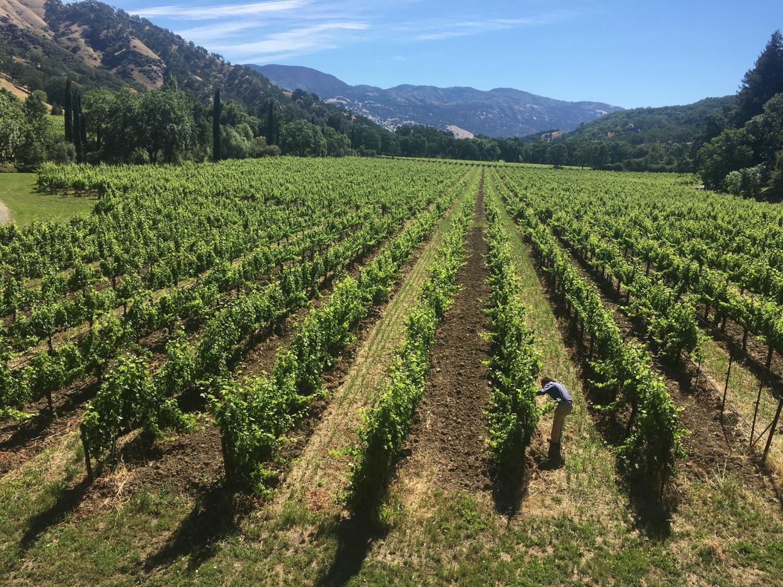 Bonterra Regenerative Vineyard Farm